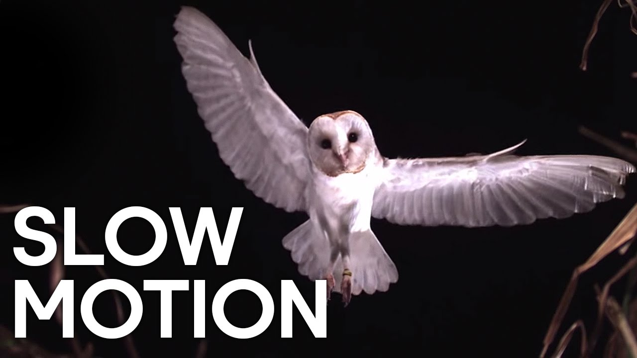 Birds in Slow Motion | Earth Unplugged