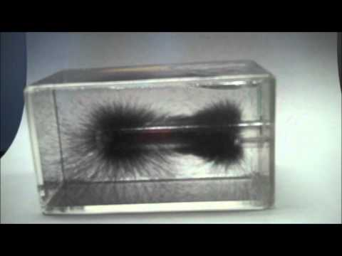 Magnetic Field lines, 3D