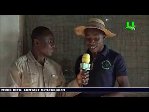 AYEKOO: How To Start A Quail Farming In Ghana