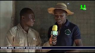 AYEKOO: How To Start A Quail Farming In Ghana