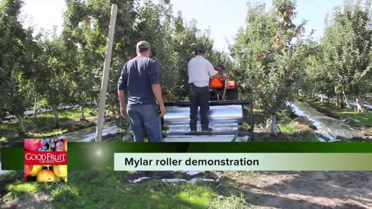 Mylar machine moves fast | Good Fruit Grower