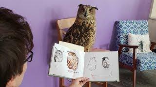 Филин Ёль выступает моделью у художников-анималистов. Как нарисовать сову?