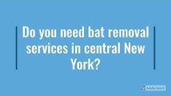Syracuse NY Bat Removal