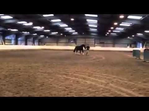 Maximillian Voltucky Stallion Show