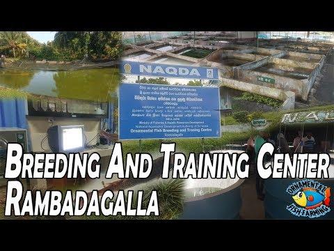 Ornamental Fish Breeding And Training Center (NAQDA) Rambadagalla- Fish Farming  Aquarium Plants