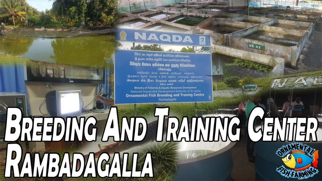 Ornamental Fish Breeding And Training Center (NAQDA) Rambadagalla