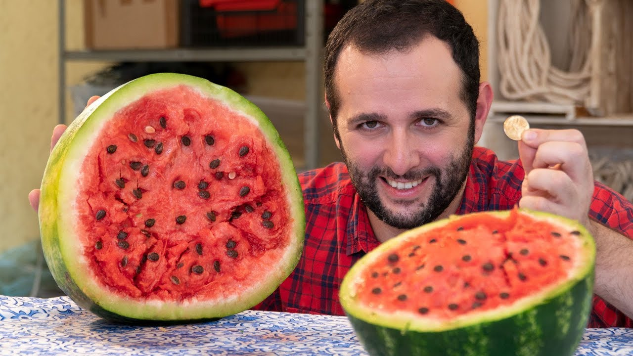 Como abrir uma melancia com uma moeda