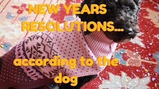 Top 7 New Years Resolutions  (According To The Dog)