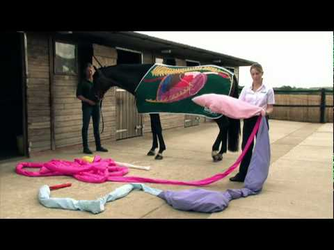 The horse's digestive system - YouTube