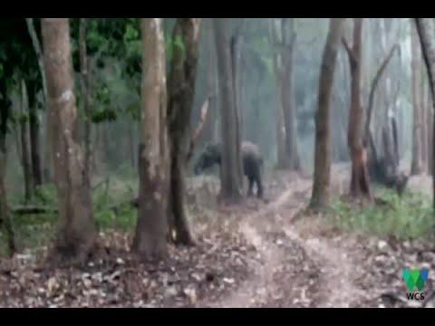 Smoking Elephant Shocks Everyone