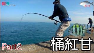 [磯釣沉底] 釣大魚桶的最強part2...雀鯛活餌桶紅甘篇2020/01/台灣69J釣魚俱樂部(69J Fishing Club)