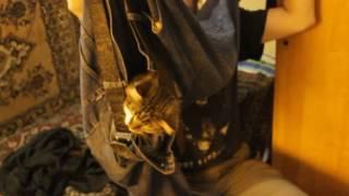 кот в штанах 3