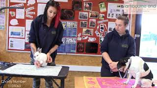 Domestic Animal Health Check