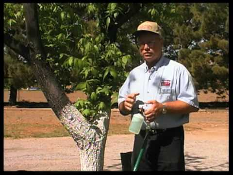 How To Add Zinc To Pecan Trees