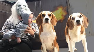 Dogs Save Baby Dragon from White Walker | Funny Dogs Louie and Marie