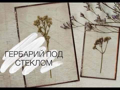 ГЕРБАРИЙ ПОД СТЕКЛОМ. как делать гербарий