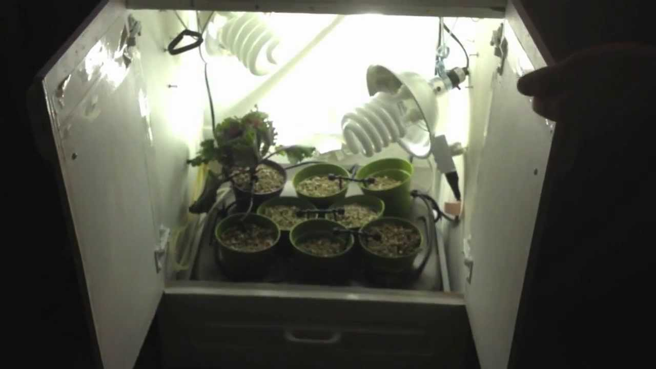 & CFL Micro Grow Box With Hydroponics and Aeration - YouTube Aboutintivar.Com