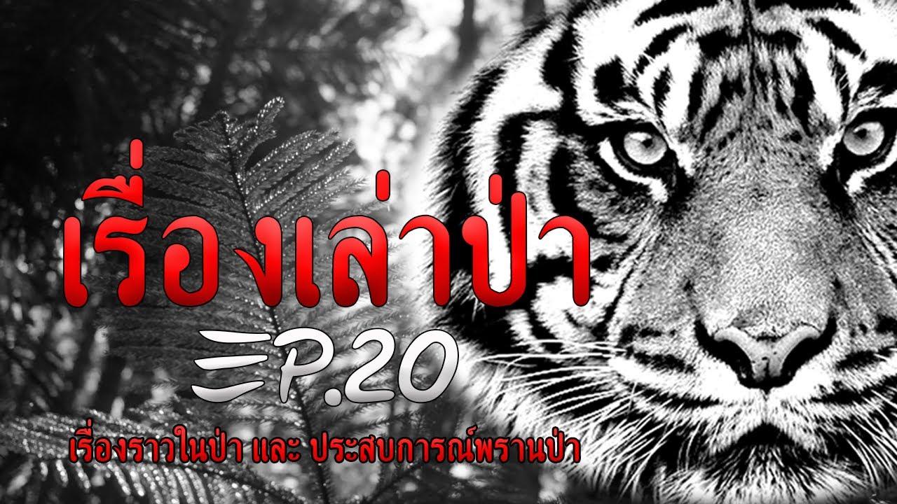 เรื่องเล่าป่า EP.20 : เล่าเรื่อง story