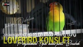 Download lagu lovebird konslet : step penjodohan agar nada berubah