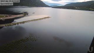 Sjøormen i Seljordsvatnet