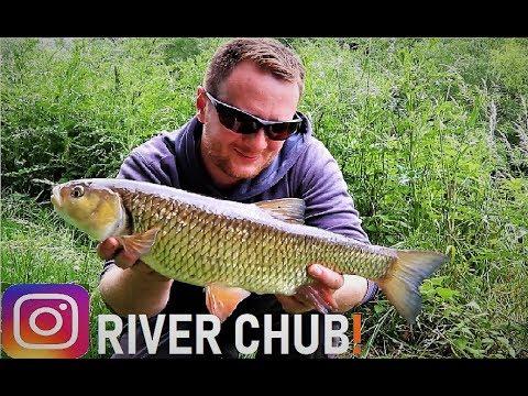 Catching A River Chub! +Update