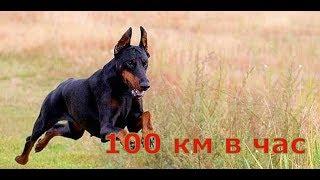 Топ 5 самых быстрых собак они удивили весь мир 2