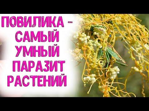 Вопрос: Растения доноры, какие лучше садить в огороде?