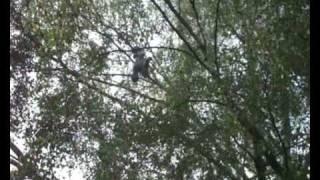 TS44-1 WO44-1 AL44-1 Hulpverlening dier (duif vast in boom) Nietzschestraat Rotterdam