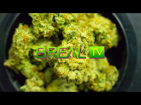 B-Real Alpha OG Strain Review (Breal TV)