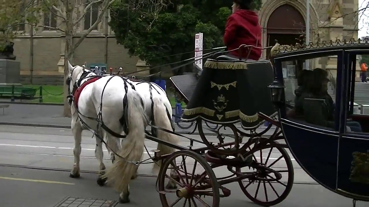 Melbourne carriage horses under the whip - YouTube