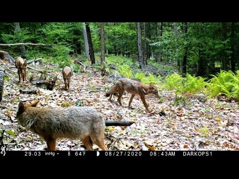 Logging Road Trail Cam Videos