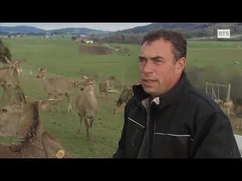 Ensemble - Aide suisse aux montagnards soutient une ferme de cerf