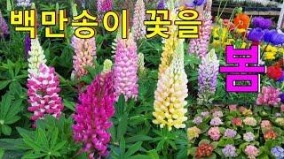 봄을 부르는 꽃들