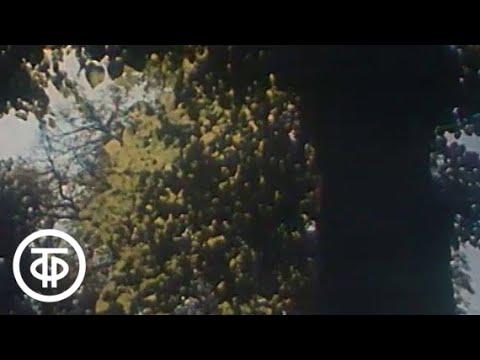 Александр Пушкин Фильм о жизни и творчестве величайшего русского поэта (1979)