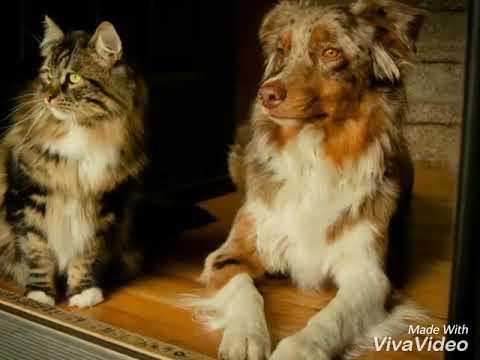 Вопрос: Кого лучше завести взрослого кота или котенка?
