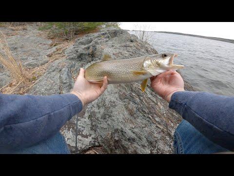 Wachusett Reservoir Lake Trout   CATCH N COOK