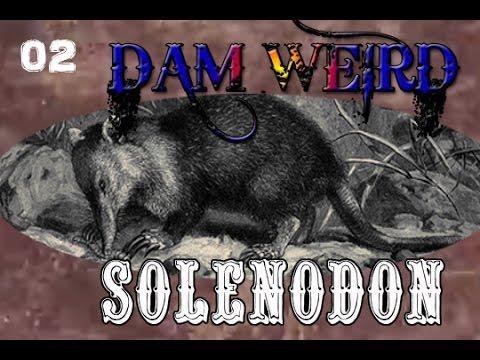 Solenodon DAM Wierd episode 2