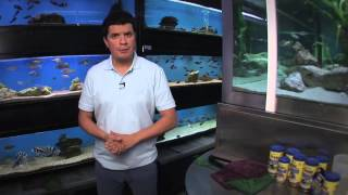 TETRA - ryby akwariowe cz. 3