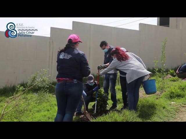 SIEMBRA ARBOLES EN SOACHA- ESE MUNICIPAL DE SOACHA JULIO CÉSAR PEÑALOZA - CUNDINAMARCA MAS VERDE