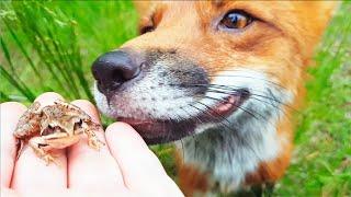 Жизнь с Лисой. Скалы, речка, природа. Первый поход за грибами в этом году.  / MIKI THE FOX