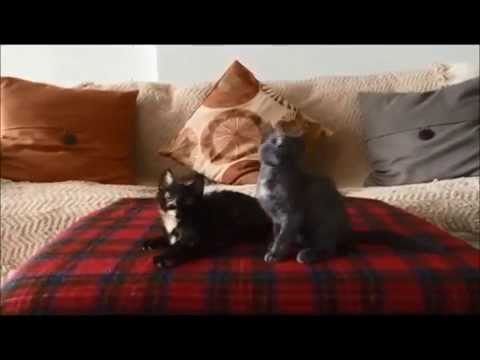 Kitten Jam – Heavy Metal Version Video (funny cats/kittens dancing and moshing) (official)