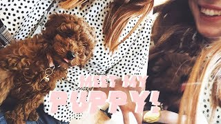 MEET MY PUPPY! | MsRosieBea