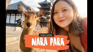 NARA PARK, JAPAN   How to make friends with deers