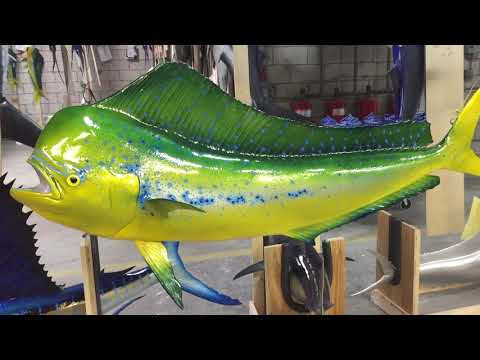 Mahi-Mahi Custom Ceiling Mount - Gray Troph Fishmounts, Custom Fish Reproductions