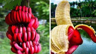 Die 10 Seltsamsten Früchte!