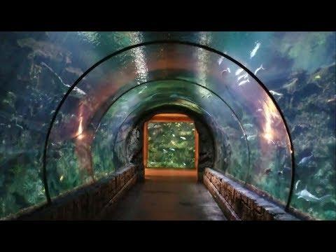 Kid Friendly Vegas: Shark Reef Aquarium Tour at Mandalay Bay Hotel & Casino