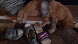 Живая грелка для котенка сфинкса