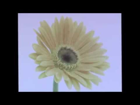 "Citizen - ""Yellow Love"" (Official Music Video)"