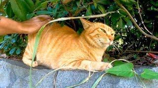 植込みの中にいた野良猫を撫でると喜んでスリスリしてカワイイ