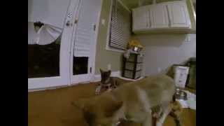 Rough housing in the kitchen. These two sisters love to play all da...